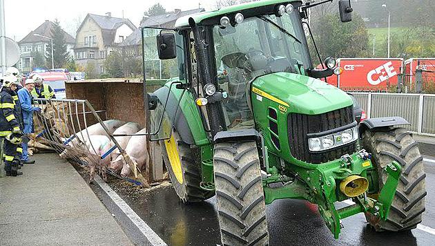Schweinetransport im Bezirk Kirchdorf umgekippt (Bild: APA/FF KREMSMÜNSTER)