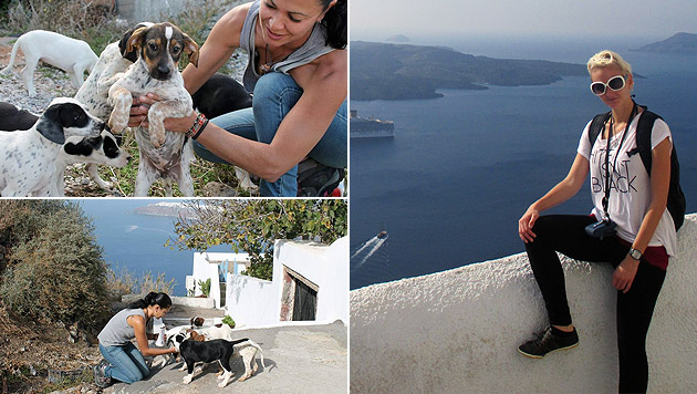 Tierfreundin hilft Streunerhunden auf Santorin (Bild: Privat)