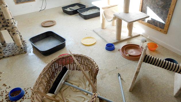 Einbrecher verwüsteten den Raum und nahmen fünf Tierheim-Katzen mit. (Bild: Facebook.com/Felidae Kleintierschutzverein Halle e.V.)
