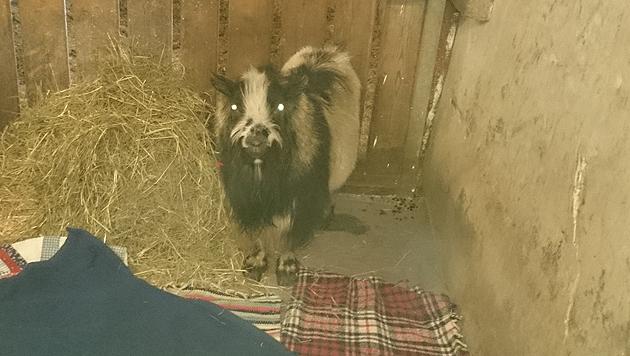 Danke dem Tierheim Schabenreith ist Celentano nun in Sicherheit. (Bild: Harald Hofner)