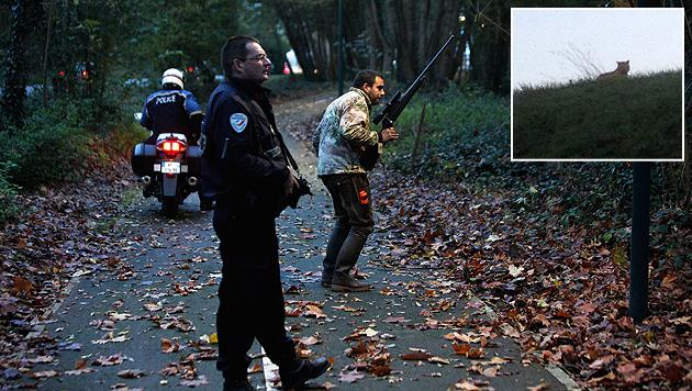 Die Jagd ist zu Ende, Gefahr hat nie bestanden. Denn der Tiger entpuppte sich als große Katze. (Bild: AP, AFP)