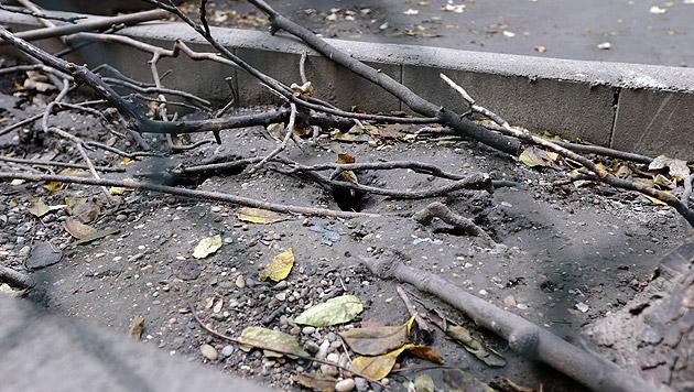 Für die Ratten ist es ein Leichtes, durch den Maschendrahtzaun auf das Grundstück zu gelangen. (Bild: Klemens Groh)
