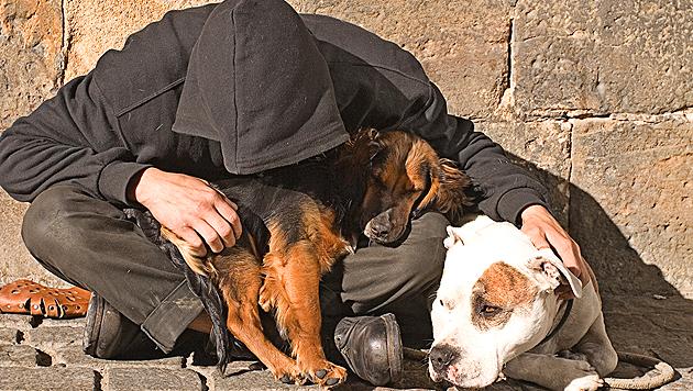 Bettler mit Hunden: Viele Tierfreunde sind besorgt (Bild: thinkstockphotos.de (Symbolbild))