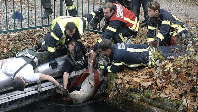 Der Rehbock wurde von der Freiwilligen Feuerwehr geborgen. (Bild: APA/FF SCHWADORF/MARKUS WILLIG)