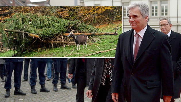 Faymann bei seinem Besuch in Aarau; kl. Bild: die Reste der Tanne im Tierpark Roggenhausen (Bild: APA/EPA/URS FLUEELER, Aargauer Zeitung/Emanuel Freudiger)