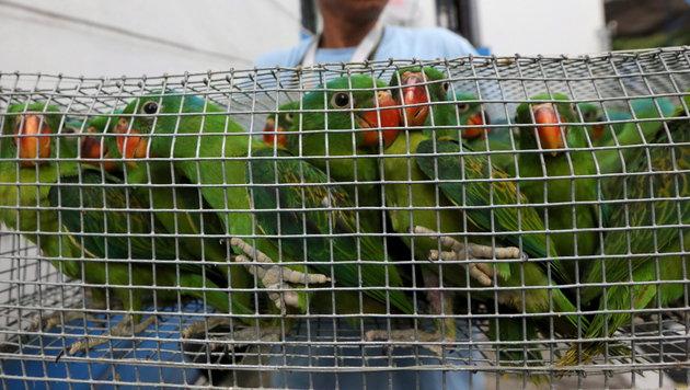 Internethandel mit bedrohten Tierarten boomt (Bild: APA/EPA/FRANCIS R. MALASIG)