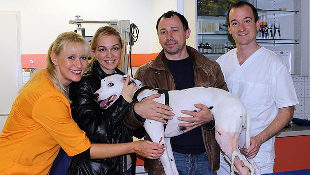 """""""Kira"""" (im Arm von Frauerl Marina N.) konnte im letzten Moment gerettet werden. (Bild: Tierklinik Quehenberger)"""