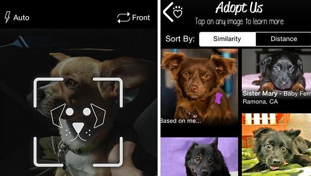 """Mit der """"PetMatch""""-App soll ein Double für den verstorbenen Hund gefunden werden. (Bild: Superfish)"""