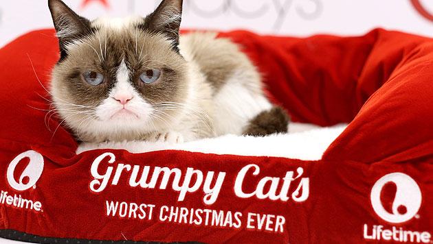 Grumpy Cat (Bild: AFP)