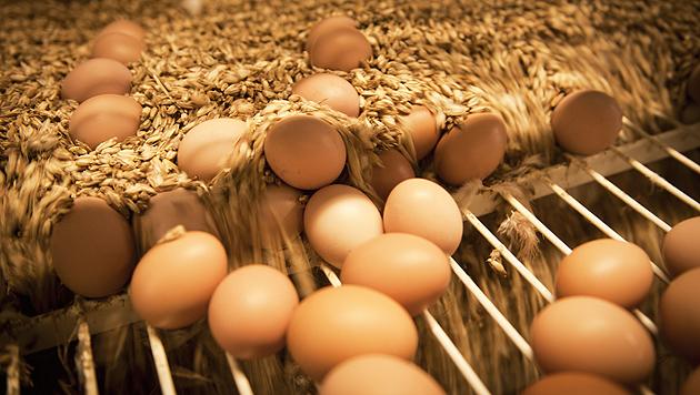 """""""Eier mit Liebe gemacht"""" sind ein Produkt aus dem Projekt """"Moosdorfer Haushuhn & Gockelhahn"""". (Bild: Ja! Natürlich)"""