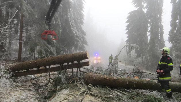 Das schwere Eis ließ Baumstämme mit bis zu einem Meter Durchmesser knicken. (Bild: APA/FF OTTENSCHLAG/FICHTINGER)