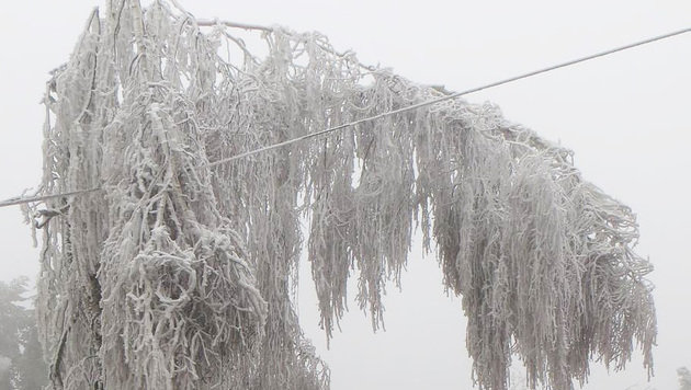 Eislast lässt Hunderte Bäume in NÖ umknicken (Bild: APA/FF OTTENSCHLAG/FICHTINGER)