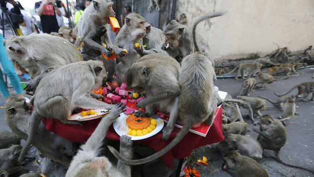 Stadt in Thailand dankt Affen mit üppigem Buffett (Bild: APA/EPA/NARONG SANGNAK)