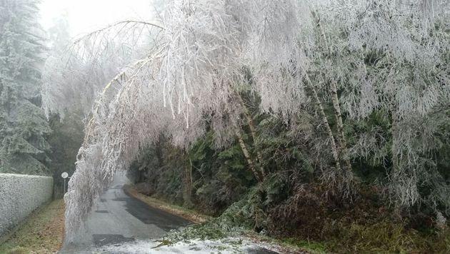 Die Bäume sind mit einer dicken Eisschicht überzogen. (Bild: APA/BFV HARTBERG)
