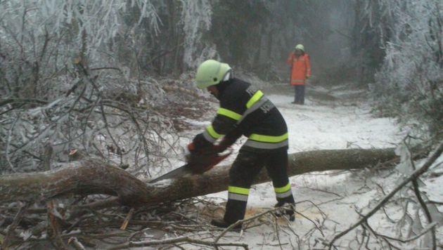 Zahlreiche umgestürzte Bäume blockieren Straßen. (Bild: APA/BFV HARTBERG)