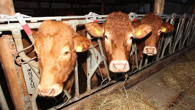 NÖ: 3 Monate bedingt für Tierhalter in Waidhofen (Bild: Jürgen Radspieler (Symbolfoto))