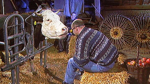 Achim Jehler konnte am 8. Dezember 2007 seine Kühe beim Apfelfressen am Schmatzgeräusch erkennen. (Bild: dpa)