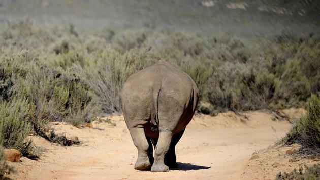 """Südafrika: Im """"Kindergarten"""" der Wildtiere (Bild: APA/HELMUT FOHRINGER)"""