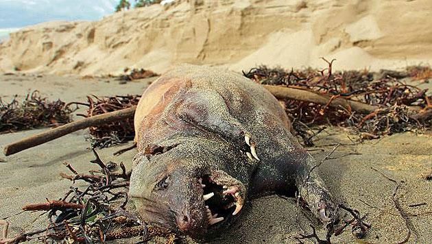 "Das ""Strandmonster"" von Santa Barbara (Bild: twitter.com/John Palminteri)"