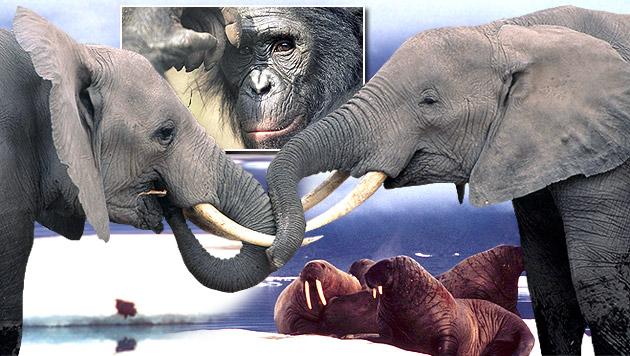 Die tierischen Gewinner und Verlierer 2015 (Bild: WWF)
