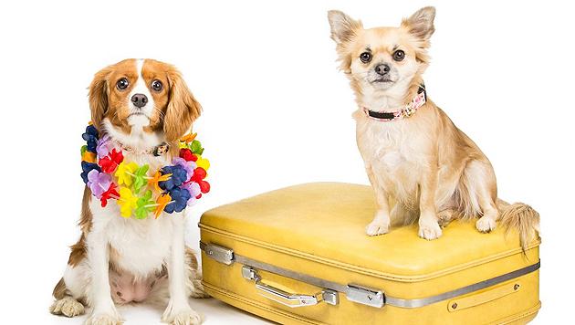 Ab in den Urlaub: Gruppenreisen mit Hund (Bild: Depositphotos.com/Nathan0834)