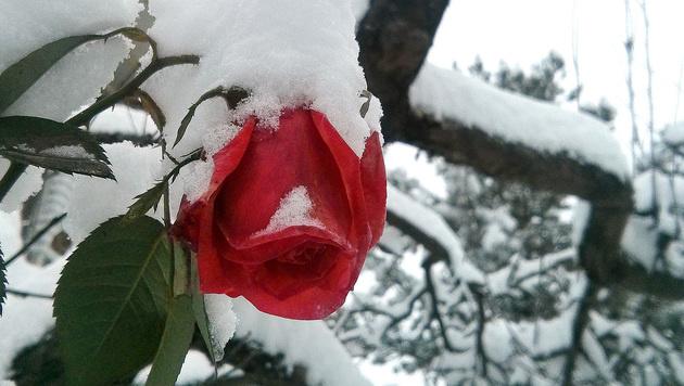 Dezember trotz kaltem Ende deutlich zu mild (Bild: APA/BARBARA GINDL)
