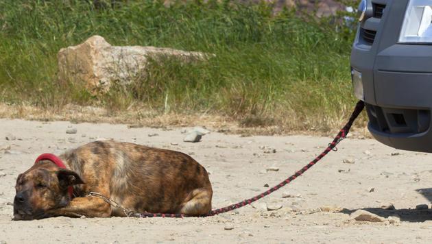 """Hund in NÖ angeleint am Auto """"ausgeführt"""" (Bild: thinkstockphotos.de (Symbolbild))"""