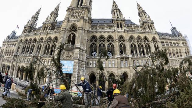 Weihnachtsbaum am Wiener Rathausplatz gefällt (Bild: APA/HERBERT NEUBAUER)