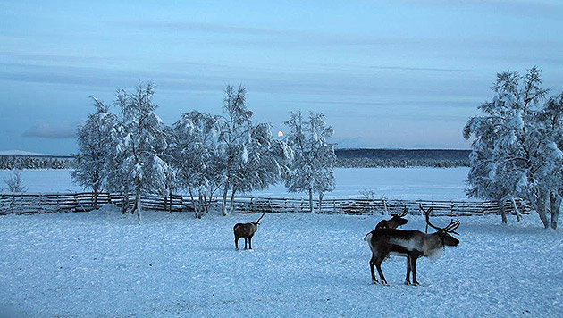 Urlauben, wo die Polarlichter tanzen (Bild: lhi)
