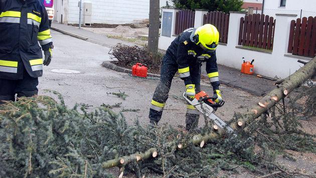 Stürme sorgen für Schäden und Temperaturrekord (Bild: Herbert Wimmer/Pressestelle BFK Mödling)