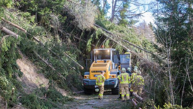 Waldarbeiter räumen einen Forstweg von umgestürzten Bäume in Osttirol. (Bild: APA/BRUNNER IMAGES/PHILIPP BRUNNER)