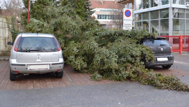 Eine heftige Windböe riss einen Baum in Neunkirchen um, der auf zwei Autos krachte. (Bild: Einsatzdoku.at)