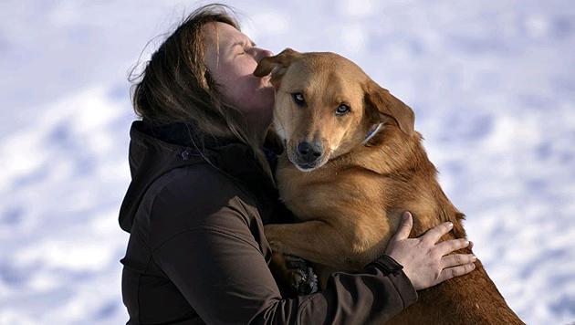 Hunde-Blicke lassen Herrchens Herz höherschlagen (Bild: Pfotenhilfe/Mihai Vasile)