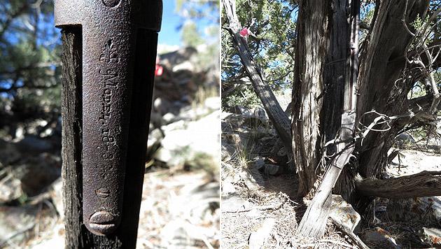 Wildwest-Winchester lehnte 100 Jahre lang an Baum (Bild: AFP)