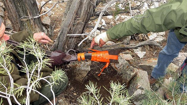 Wildwest-Winchester lehnte 100 Jahre lang an Baum (Bild: facebook.com/GreatBasinNPS)