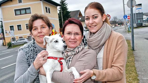 Hunde aus zweiter Hand beim Fressnapf-Training (Bild: Markus Tschepp)