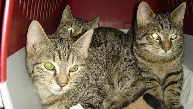 rufe nach tierheim f r v cklabruck werden lauter katzen ausgesetzt tierecke. Black Bedroom Furniture Sets. Home Design Ideas