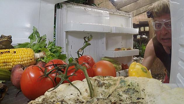 Neben vergammelten Lebensmitteln tummeln sich hier auch Frösche. (Bild: RTL/Stefan Menne)