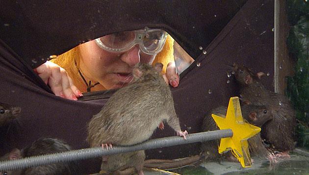 Die Ratte ist sehr neugierig. (Bild: RTL/Stefan Menne)