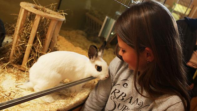 """Im """"Tiko"""" hoffen viele entzückende Kaninchen auf etwas Zuwendung. (Bild: Uta Rojsek-Wiedergut)"""