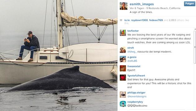 Wegen Handy wohl coolstes Wal-Erlebnis verpasst (Bild: instagram.com/esmith_images)