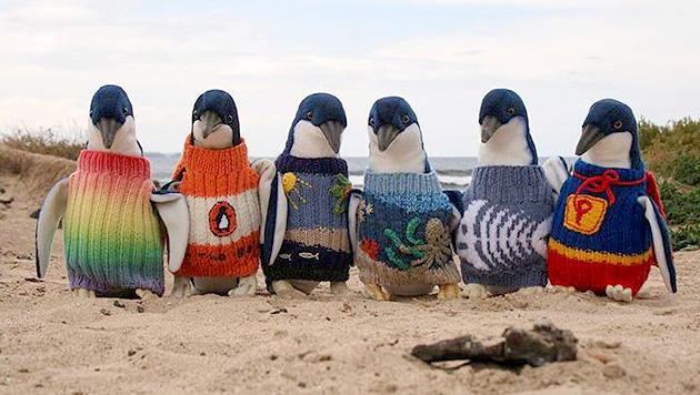 Tierfreunde strickten Mini-Pullover für Pinguine (Bild: Penguin Foundation)