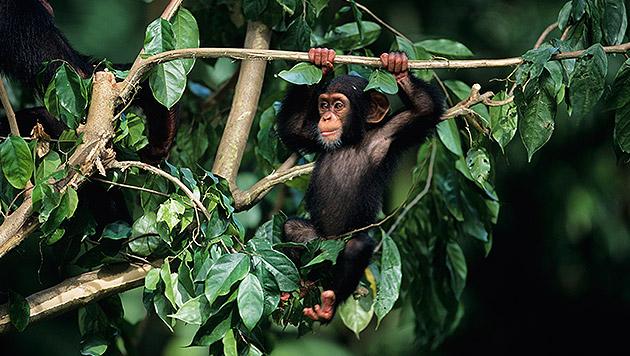 Uganda: Ein Rendezvous im grünen Paradies (Bild: thinkstockphotos.de)