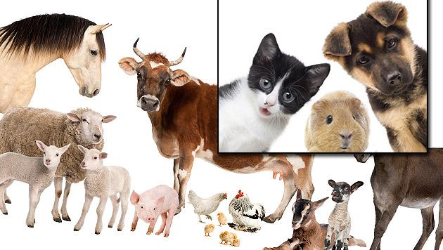 """Haustiere vermenschlicht, """"Nutztiere"""" als Waren? (Bild: thinkstockphotos.de)"""
