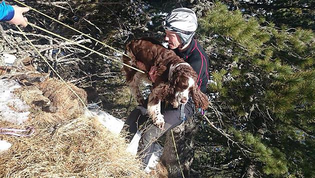Hund rutschte über Felsplatte ab - gerettet (Bild: Bergrettung Garsten)