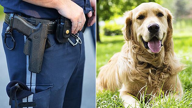 Polizist in Zivil tötet Hund mit vier Schüssen (Bild: APA/BARBARA GINDL, thinkstockphotos.de (Symbolbild))