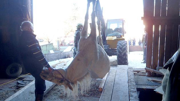 Geglückte Rettungsaktion für ein abgestürztes Pferd (Bild: FF Arnreit)