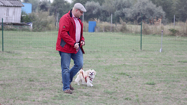 Die Hundeschule 4 Pfoten bildet Zwei- und Vierbeiner im Norden Wiens aus. (Bild: Hundeschule 4 Pfoten)