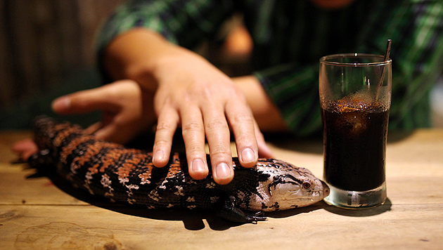 Im vietnamesischen Hanoi streicheln Besucher Exoten, während sie etwas trinken. (Bild: APA/EPA/Luong Thai-Linh)