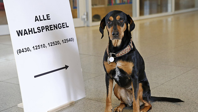 Kärnten-Wahlen: SPÖ als klarer Sieger (Bild: APA/GERT EGGENBERGER)